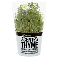 Waitrose Cooks' Ingredients British thyme pot medium