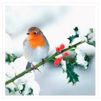 Waitrose Home Photo Robin Napkins