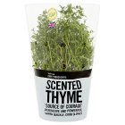 Waitrose Cooks' Ingredients British thyme pot medium -