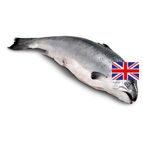 Waitrose whole Scottish salmon 4kg