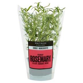 Waitrose Cooks' Ingredients British rosemary pot medium