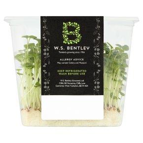 B Sow Healthy Microgreens Selection
