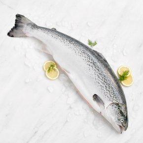 Large Fresh Whole Scottish Salmon