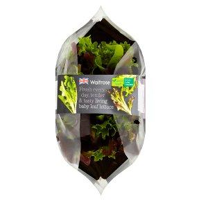 Waitrose living baby leaf salad